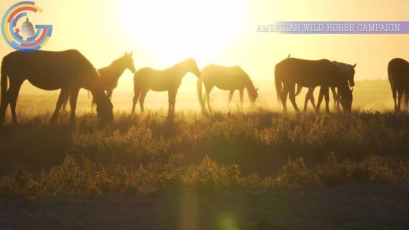 Wild horse advocates condemn Interior Department's population control plan